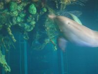 The Seas with Nemo & Friends 044 44