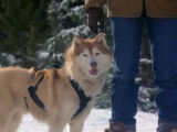 Duchess (Snow Dogs)