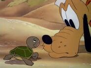 Pluto and turtle