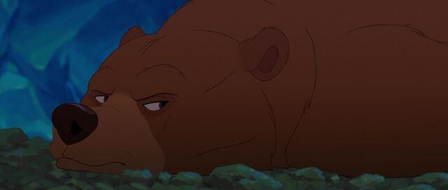 File:Bear 8.jpg