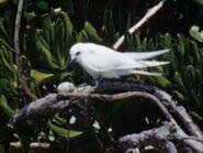 1952-oiseaux-2