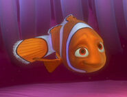 Coral the Clownfish