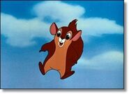 Flyingsquirrel