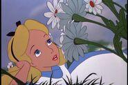 Alice017