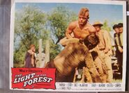 The light in the forest lobby card 2