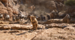 The Lion King (2019 film) (20)