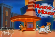 HOMcats