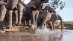 Simba and elephant 2019