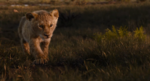 The Lion King (2019 film) (17)