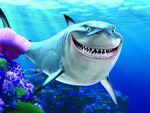 Finding Nemo(21)