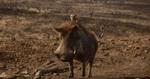 Timon and Pumbaa 2019
