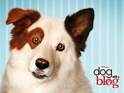 Dogwithablog