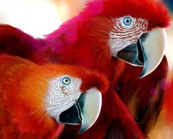 Red parrots wallpaper 50818