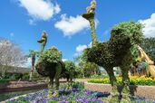 Epcot-International-Flower-and-Garden-Festival Full 29685