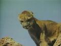 1957-hound-06.jpg