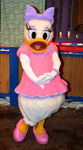 Daisy-duck-and-donald-duck-meet-and-greet-at-animal-kingdoms-discovery-island-6