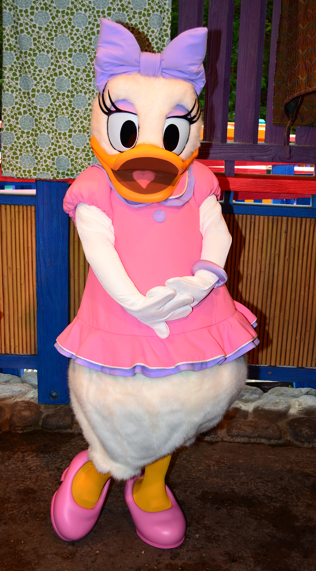 Image Daisy Duck And Donald Duck Meet And Greet At Animal Kingdoms