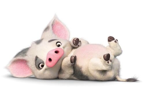 vaiana schwein