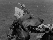 1957-doggoned-3