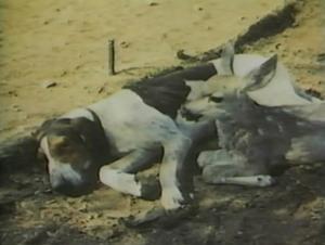 1957-hound-03