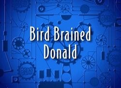 Bird brained donald 3large