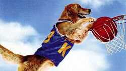 Air Bud Header