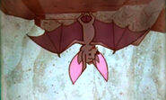 Bat from You and Your Five Senses
