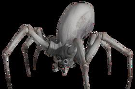 Krykna Spiders