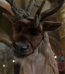 comet - Reindeer Images 2
