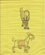 THOND Djali Sketch 2