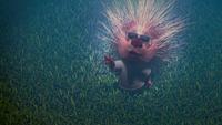Morkubine Porcupine Disney Wiki Fandom Powered By Wikia