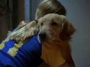 Air-bud-7th-disneyscreencaps.com-8114