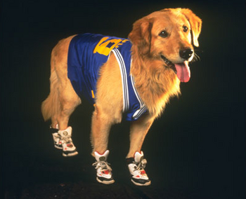 Air Buddy