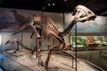 Field Museum Parasaurolophus