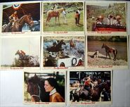 Run-appaloosa-run-1966-original-uk-lobby-card-set-walt-disney-adele-palacios-hugh-cherry-1621-p
