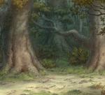 Woods 7