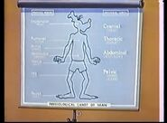 Physiological chart of goofy
