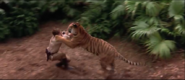 The Jungle Book 1994 Widescreen Wilkins Pounced by Shere Khan