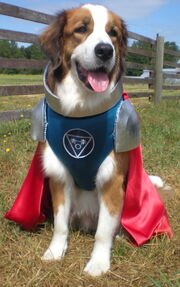 Capt-Canine