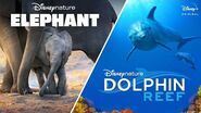 Disneynature's Elephant and Dolphin Reef Streaming April 3 Disney