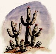 WRE Singing Cacti