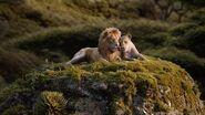 Король Лев - Взгляни на звёзды