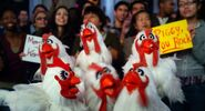 Muppets2011Trailer02-46