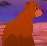 Bear!Nita