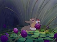 Thumper about to eat Blossom