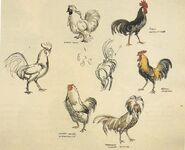 Marc Davis Chanticleer Studies (1)