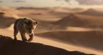 Simba desert 2019