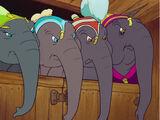 Elefantesse del circo
