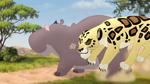 The-golden-zebra (58)