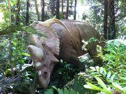 Cretaceous Trail Ceratopsid
